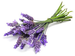 lavender for skin